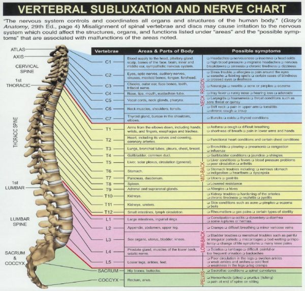 Spinal Chart wide